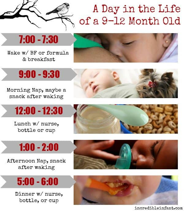 A Day in the Life of a 9-12 Month Old - MightyMoms.club